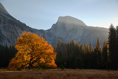 Sunrise, Cook's Meadow, Yosemite Valley (donberry37 (SF Bay Area)) Tags: yosemite california sunrise halfdome sierra