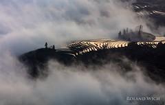 Yuanyang (Rolandito.) Tags: asia chine china yunnan yuanyang rice terrace terraces morning fog