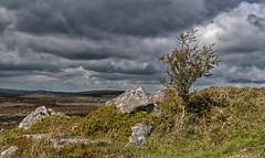 Rain is on it's way (David Feuerhelm) Tags: nikkor wideangle shrub moor moorland clouds stormy dartmoor nikon d90 18200mmf3556 nature