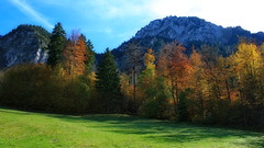 Autumn in the Alps (endresárvári) Tags: germany autumn autumncolors colors colorful pasture sunshine autumnsunshine pines