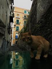 IMG_8586 (2) (kriD1973) Tags: europe europa italia italien italie italy campania kampanien campanie salerno salerne pets haustiere animali domestici cat gatto katze chat pet cats gatti chats katzen gato felino animal animale tier