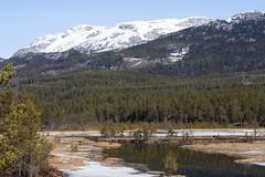 Mountain 1.7, Telemark, Norway (Knut-Arve Simonsen) Tags: telemark norge норвегия norway noruega norwegen norvegia norvège नॉर्वे 挪威 ノルウェー நோர்வே νορβηγία sydnorge sørnorge østlandet norden scandinavia скандинавия