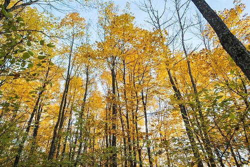Sunny autumn forest.