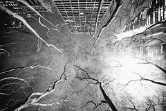 Desperation (Thomas Hawk) Tags: america manhattan nyc newyork newyorkcity usa unitedstates unitedstatesofamerica architecture bw fav10 fav25 fav50 fav100
