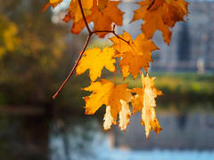 PA140604 (banagher_links) Tags: olympus omd em10 mark iii autumn russia moscow mft micro 43 юпитер8 jupiter8