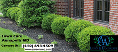 Lawn Care Annapolis MD (aalawnandlandscapellc) Tags: lawn care annapolis md aa landscape llc