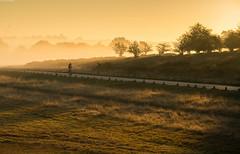 Early Riser (Alan Habbick Photography.) Tags: sunrise richmondparksunrise autumnmorning