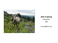 "Ram in Spring • <a style=""font-size:0.8em;"" href=""https://www.flickr.com/photos/124378531@N04/45363484921/"" target=""_blank"">View on Flickr</a>"