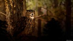 Owl (Ken Mickel) Tags: animal animals arizona birds kenmickelphotography owl texture textured textures wildlife zoo bird nature photography