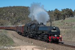 Steam in Sodwalls (Henry's Railway Gallery) Tags: 6029 ad60class garratt steamlocomotive steamtrain heritagetrain thnsw transportheritagensw passengertrain 6s65 sodwalls