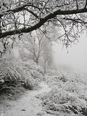 71485772 (aniaerm) Tags: snow ice frost