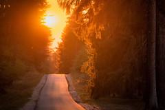 liquid gold (Rafael Zenon Wagner) Tags: sonnenuntergang gold wald sonne strasse schneise licht nikon d810 sunset wood sun street aisle light ddr gdr