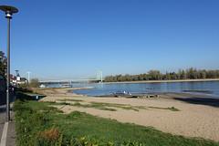wo sonst Rheinwasser ist, wächst jetzt grünes (mama knipst!) Tags: rhein rhine niedrigwasser oktober deutschland germany allemagne