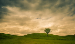 I think that I shall never see a poem lovely as a tree.~Joyce Kilmer~ (Lorrainemorris) Tags: fineart artistic creative silence walkway grass sonyilce lorrainemorris dramatic sky moody clouds hills yellow green lonelytree tree ireland landscape zeiss 1635 sonyzeiss sony7rm2
