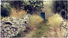 ... (Augusta Onida) Tags: masseria sicilia sicily ficodindia casadipietra houseofstone ulivo albero tree campagna country italia italy leicam grass cielo street