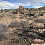 Scorched Desert. thumbnail