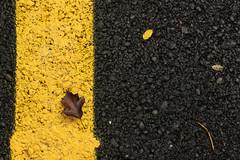 yellow line... (yasin.orhan) Tags: yellow line leaf