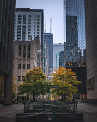 Fall in the City (tylerjacobs) Tags: sony a6000 sigma 16mm f14 fall autumn foliage leaves trees orange red city cityscape chicago illinois enjoy chi town metropolis contrast