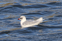 Pow Burn Selection (Dougie Edmond) Tags: bird birds nature wildlife prestwick scotland unitedkingdom gb