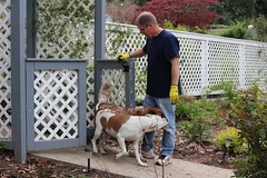Ozza (left) and Bella (right) greet Hough in the garden. These are two of the dogs Rallo has rescued from the local animal shelter. Hough says that in the future they plan on hosting a fundraising event for the animal shelter on the property.