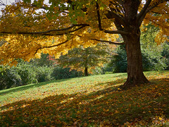 Fall Colors - EMB07971 (j_m_kubler) Tags: c1 captureonepro olympusem1 olympus12100mmf4 devouparkky covington