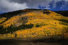 Yellow - Colorado (Bernie Duhamel) Tags: fall fallfoliage aspen aspentrees trees colorado clouds mountains rockymountains teamsony frontrange greatphotographers bernie duhamel sonya7riii sony2470mm