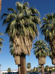 Palm Spings (ligiavcrispino) Tags: