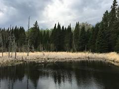 MNDNR_SNA_DinnerCreek (minnesota_snas) Tags: mndnr minnesota departmentofnaturalresources dnr sna scientificandnaturalarea dinner creek water trees may 2018