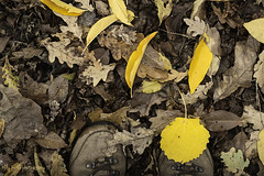 #Week (aenee) Tags: aenee nikond7100 nikkor50mm118d flickrfriday week walk wandeling walking lopen autumn herfst leaves bladeren walkingshoes wandelschoenen dsc7678 20181113 yellow geel