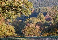 (:Linda:) Tags: germany thuringia village bürden tree oaktree