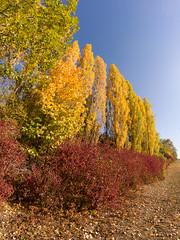 Herbst (OK's Pics) Tags: herbst jahreszeiten