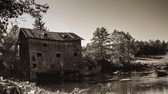 An old windmill. Masovia. Poland. (QUZZart) Tags: wkra polishlandscape polishphotographer canon blackwhite blackandwhite polska poland mazowsze masovia joniec windwill