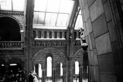 Museum wall statue (tercrossman87) Tags: canon p ilford hp5 400 1600 push ilfotec microphen stock home development film plustek 8200i voigtlander 35mm 17 ultron ltm