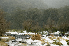 Snow on the Pass (fantommst) Tags: lisaridings fantommst newzealand nz fiordland national park milford sound snowfall creek landscape milfordsoundpass monkeycreek
