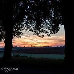 Framed rural sunrise (Mike Y. Gyver ( Back Home )) Tags: mygphotographiewixsitecommyg2017 myg nikonafsdxnikkor18105mm3556g d90 nikon sky sun serenity sunrise belgium belgique travel framed tree colors contrast