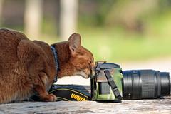 Shooting Birds (K.Verhulst) Tags: kat cats cat pictures pet huisdier ommoordseveld camera foto