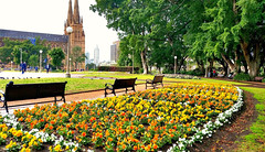 Hyde Park in Spring (missgeok) Tags: hydepark sydney australia park flowers orange yellow bedofflowers springtime spring beautiful stmaryscathedral church oldestpark whiteflowers yellowflowers orangeflowers spectacular lovespring seasonal outdoor colours colourfulflowers gardenbenches benches trees