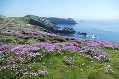 Skomer Island WT- Pembs Wales -May18 (4) (ailognom2005) Tags: skomerisland wildlifereserves wildlifetrust pembrokeshire wales birds flora flowers landscape seascape