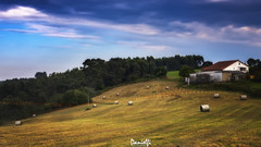 Granjero invisible - Invisible farmer (danielfi) Tags: hierba grass asturias asturies campo countryside agricultura agriculture farming granja farm paisaje landscape ngc