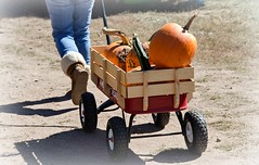 Headed Home With The Harvest (catmccray) Tags: pumpkinfestival chatfieldbotanicgardens pumpkins autumn fall october littleredwagon