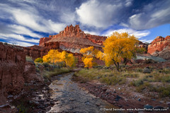 Capitol Reef Color (David Swindler (ActionPhotoTours.com)) Tags: capitolreef sulphurcreek thecastle utah autumn castle colors cottonwoods fall river trees