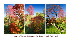 180 degree panorama... (smir_001) Tags: october autumn garden botanical park victoria bath plants england british canoneos7d royalvictoriapark botanicalgardens flora leaves colours nature bathnes somerset uk maple acer fall colourful color red blue orange green landscape outdoor spectacular foliage autumnfoliage fallfoliage triptych