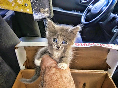 Nothing Cuter Than a Kitten (donjuanmon) Tags: cliches clichesaturday hcs donjuanmon