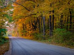 Sunset down a Country Road (mjhedge) Tags: indiana bridgeton fall autumn golden orange goldenhour road rural country trees fallfoliage oly olympus omdem1mkii omd em1mkiiomdem1markii em1ii 40150 40150mm olympusm40150f28 getolympus foliage