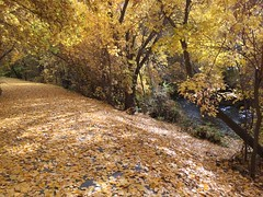 IMG_2794 (August Benjamin) Tags: provo provoriver provorivertrail fall utah mountains provocanyon fallcolors autumn trees leaves orem utahvalley jogging