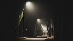 #mist #moonlight #light #trees (jose6210) Tags: moonlight light trees mist