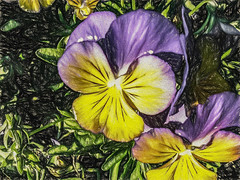 Delighted To Be Here (p) (davidseibold) Tags: america bakersfield california colorvioletbluepurple coloryellow flower jfflickr kerncounty nature painting pansy photosbydavid plant platoct postedonello postedonflickr unitedstates usa