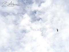 Freedom (Boby Perkasa) Tags: bird cloud beach kaimana papua