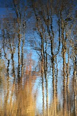 new horizon (courtney065) Tags: nikond600 nature landscapes wetland trees foliage winter blue sky grasses reflections pondreflections artistic abstract ripples waterreflections painterly textures glow water woodland shimmering pondscape blur brown earthy wavy