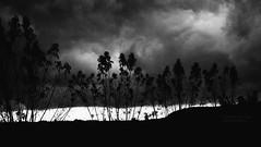 bad or nice weather (Drehscheibe) Tags: nikonf2 nikon nikkor24mm blackwhite nature kodaktrix400 himmel wolke analog